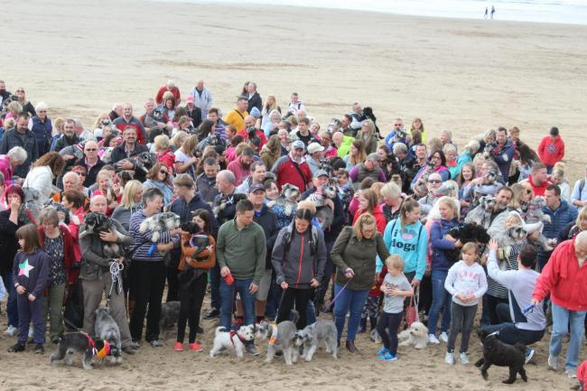 Schaunzer owners and their pets took a walk along Whitmore Bay.