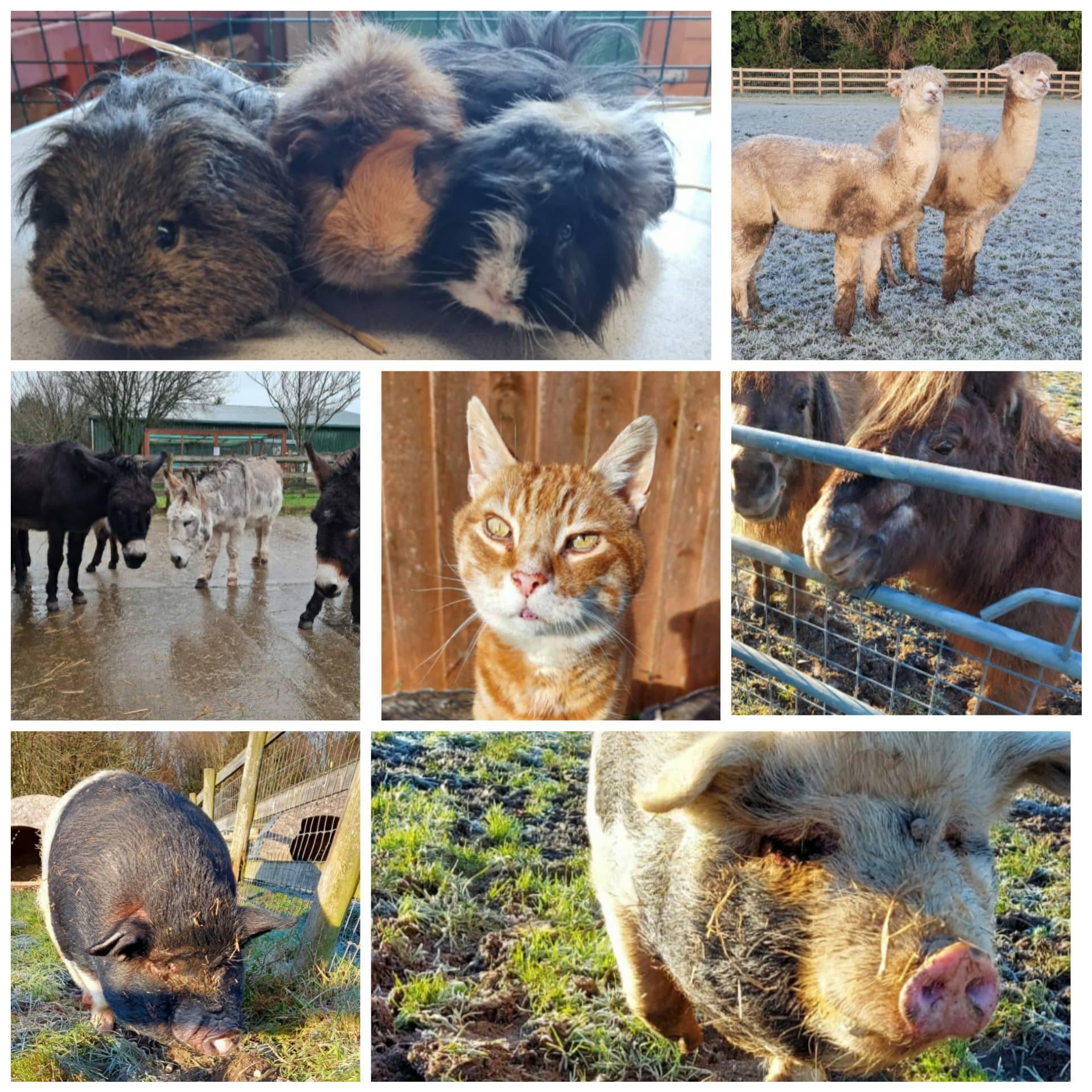 (Picture: Amelia Trust Farms Facebook)