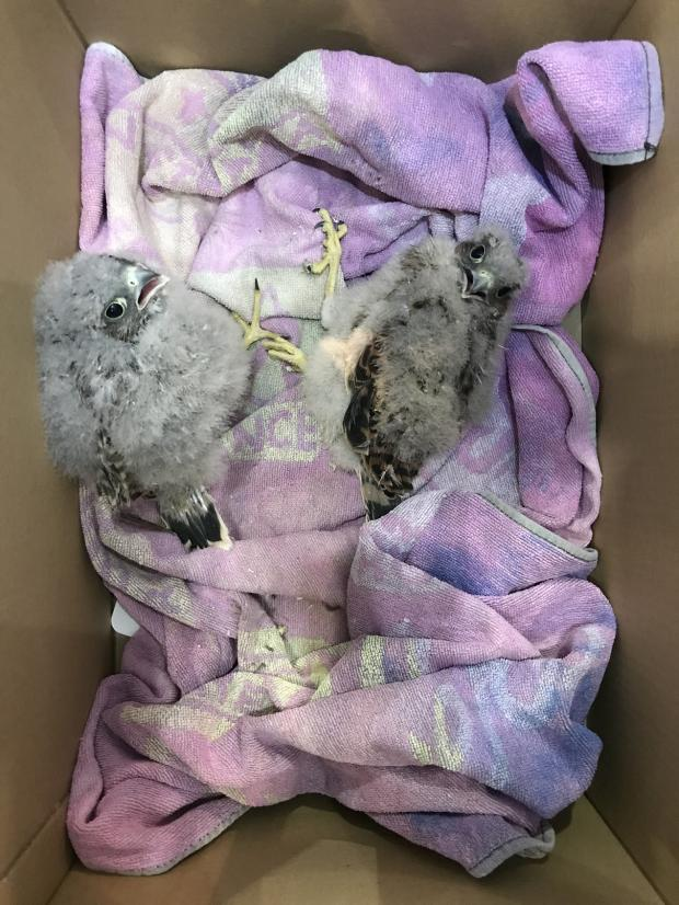 Barry And District News: (Picture: RSPCA)