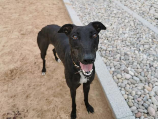 Barry And District News: Toby was the first dog adopted from the rehoming centre (Picture: Dogs Trust)