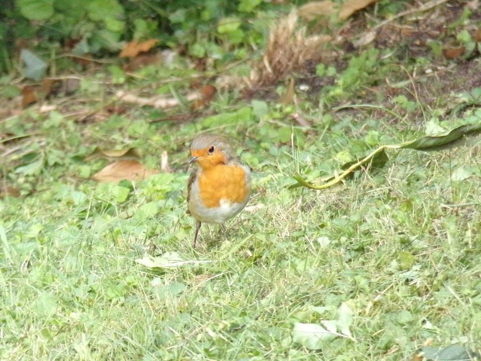 Gwyn Elfed Morgan captured this little robin in the Vale