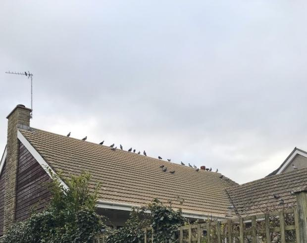 Barry And District News: Increased amount of birds flying around the area became a problem for residents