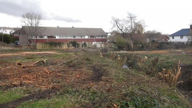 CLEARING: Tree felling in Stream Field (4394759)