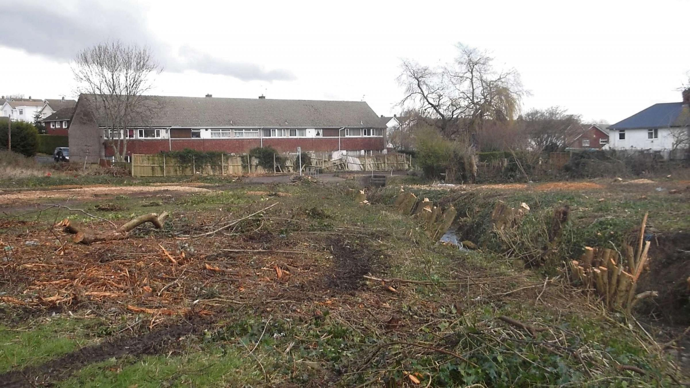 CLEARING: Tree felling in Stream Field. (4394759)