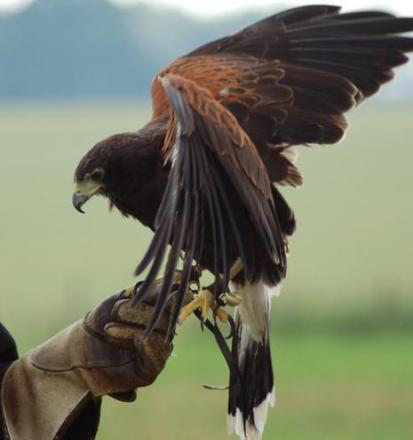 Fears for future of the centre where birds of prey are on show