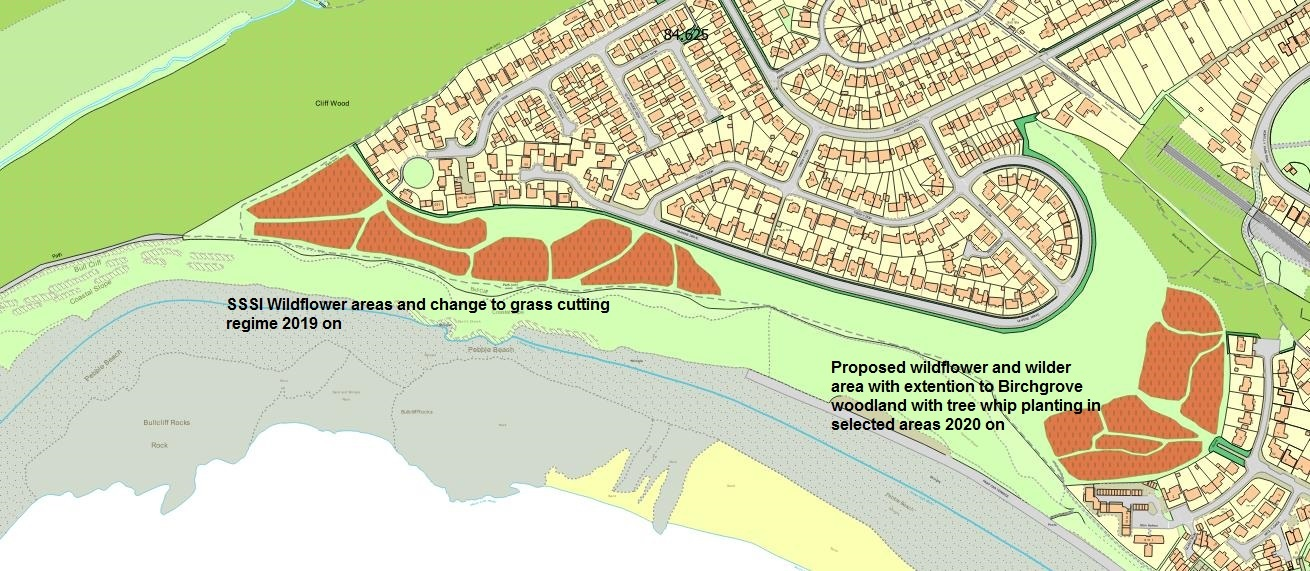 Proposed Marine Drive wildflowers site